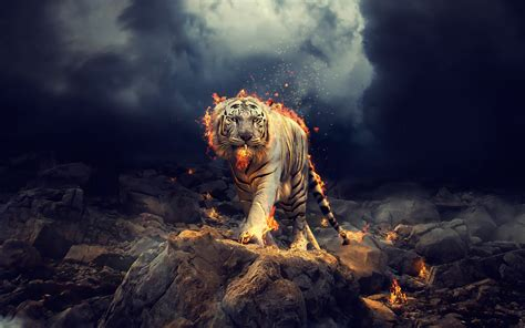 Wallpaper White Tiger, Fire, CGI, HD, Creative Graphics